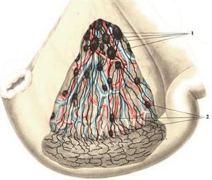 Lymfadeniitti